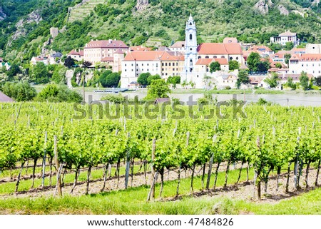 Durnstein, vineyard in Wachau Region, Lower Austria, Austria