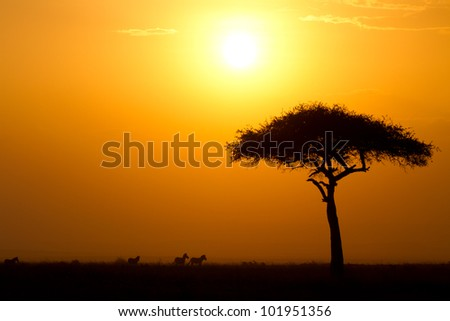 Dusk in the Masai Maria National Reserve with Acacia tree and silhouettes of Zebras, Keya, Africa