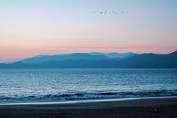 Dusk on the San Fran bay with a flock of birds