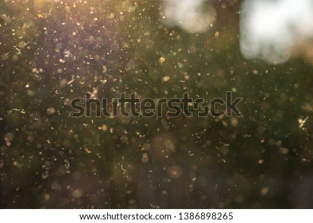 Dust, pollen and small particles fly through the air in the sunshine. Stock photo ©
