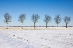 Dutch agricultural landscape with country road and trees covered by white snow