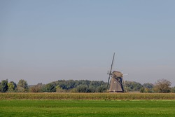 Dutch agriculture in summer, Corn or maize field with traditional windmill as background, Polder land with green meadow, Countryside landscape with flat and low land under blue clear sky, Netherlands.