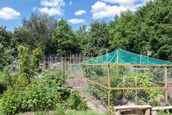 Dutch allotment garden with bean stakes near edge of the wood