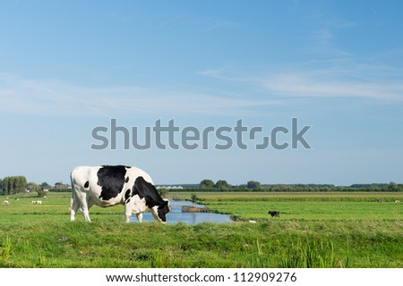 Dutch black and white cow in typical landscape