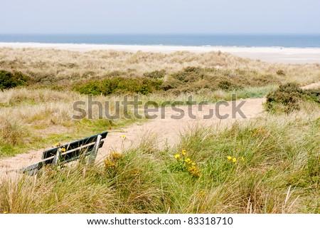 Dutch coast with dunes and beach