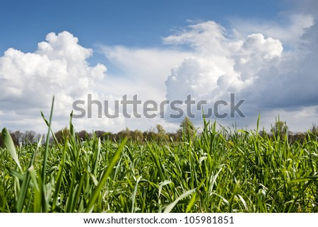 Dutch grassland and trees under a blue sky with white clouds