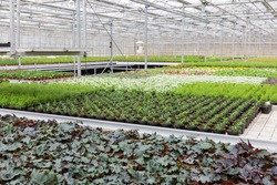 Dutch Greenhouse with cultivation of several plants and flowers