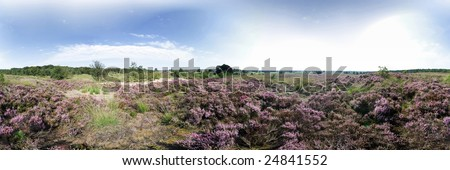 Dutch Heathland Panorama