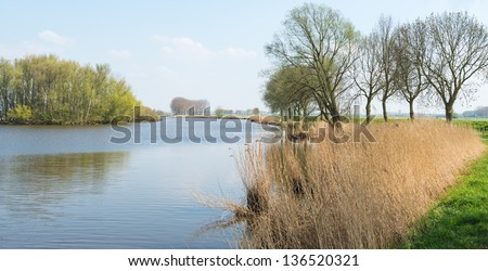 Dutch landscape with a wide stream, yellowed reeds and green coloring trees with young leaves.
