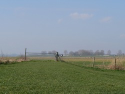 Dutch landscape with fence and green grass. With a farm, trees and birds in the background.