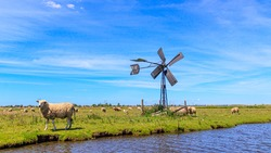 Dutch landscape with sheep, grassland and windmill