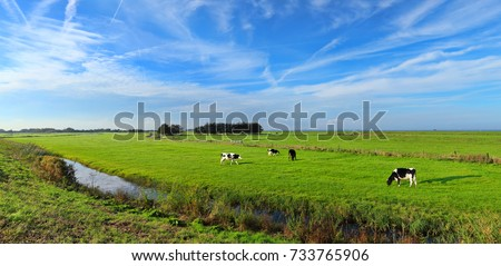 Dutch meadow panoramic landscape with traditional water canals. Pastures of green juicy grass. Dutch breed cows and sheep grazing. Netherlands. Remembering the Europe travel #733765906