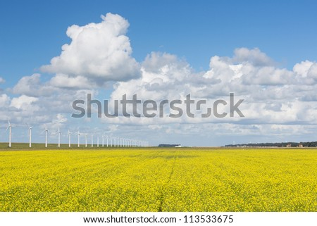 Dutch wind turbines behind a yellow cole seed field