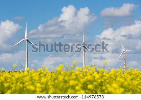 Dutch wind turbines behind a yellow rapeseed field
