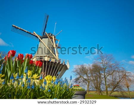 Dutch windmill and colorful tulips