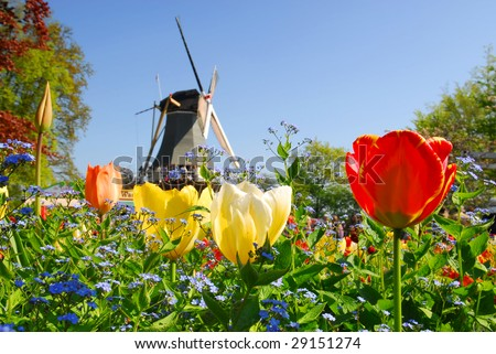 Dutch windmill and colorful tulips and forget-me-not flowers in famous spring garden 'Keukenhof', Holland