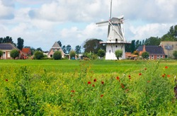 Dutch windmill and poppy flowers, Netherlands