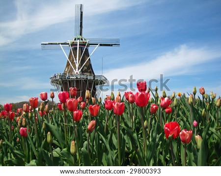 Dutch windmill in Holland, Michigan, during  the Tulip Festival