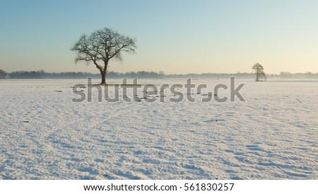 Dutch Winter Landscape #561830257