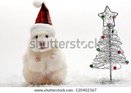Dwarf Hamster With Christmas Red Hat White Background Stock Photo