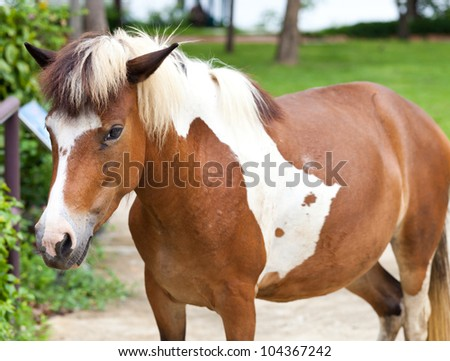 Dwarf horses in garden white and brown color