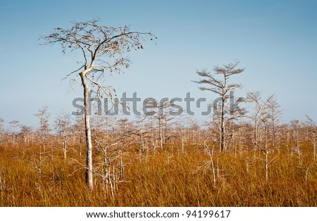 Dwarfed bald cypress trees near the Pa-hay-okee trail in Everglades National Park near Homestead, Florida