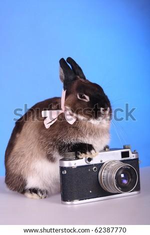 Dwarfish rabbit - the photographer