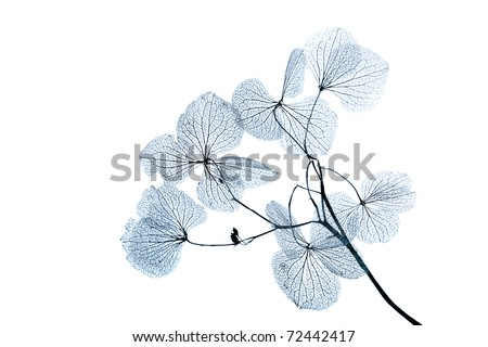 Dy leaves - stock photo