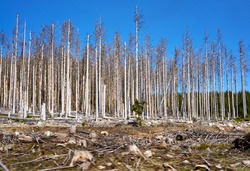 Dying forest in Germany. Through climate change, drought and bark beetles. Dynamics through motion blur.