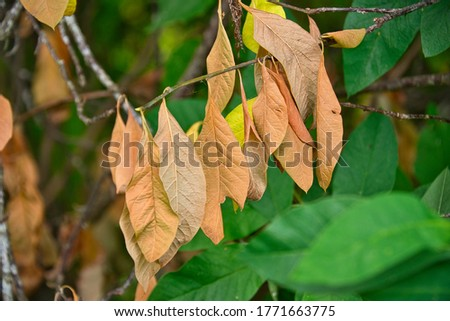 DYING LEAVES ON A BRANCH SURROUNDED BY FRESH GREEN VEGETATION