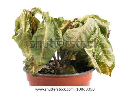 Plastic Flower Pots on Dying Plant In Plastic Pot Stock Photo 10863358   Shutterstock