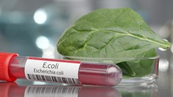 E.coli antibodies next to bowl of spinach in medical lab