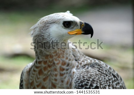 Eagle, a terrifying predator animal Fly fast, fly fast, fly high and fly far