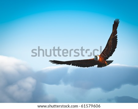 eagle above the clouds