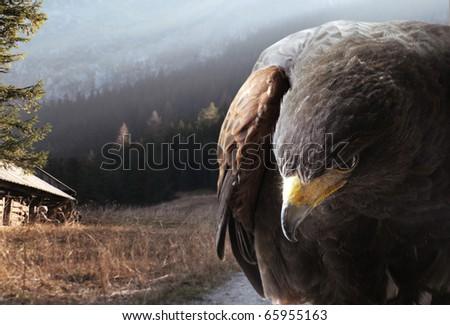 Eagle against the mountains - stock photo