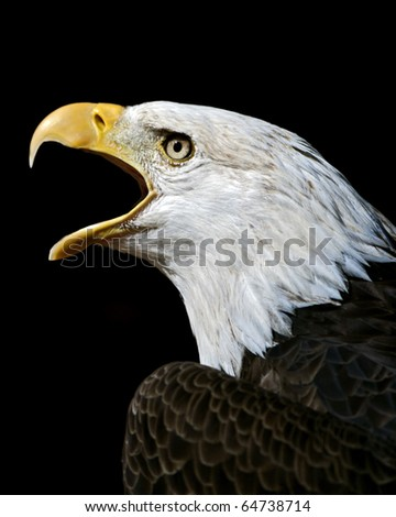 eagle calling on a black background