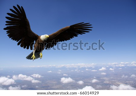 eagle casual flight