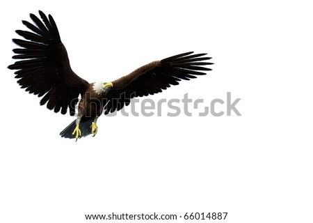 eagle casual flight white background