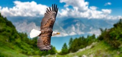 Eagle flies at high altitude with wings outstretched on a sunny day in the mountains.