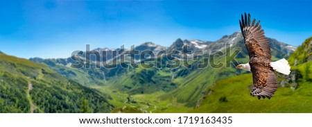 Eagle flies at high altitude with wings spread out on a sunny day in the mountains. Foto stock ©