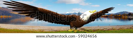 eagle flying above the landscape