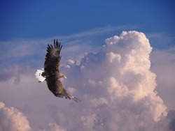 Eagle flying at the bright colorful sunset sky