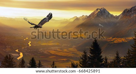 Eagle flying, Golden eagle                                        Stock photo ©