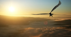 Eagle flying in the clouds at dawn
