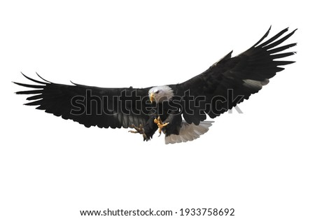 Eagle flying isolated at white Foto stock ©