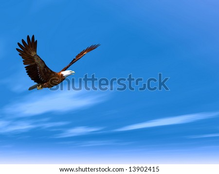 Eagle flying on a background of the dark blue sky - stock photo