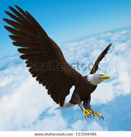 eagle in blue sky