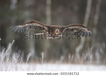 Eagle in Czech republic and my best flying photo.