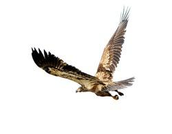 Eagle isolation