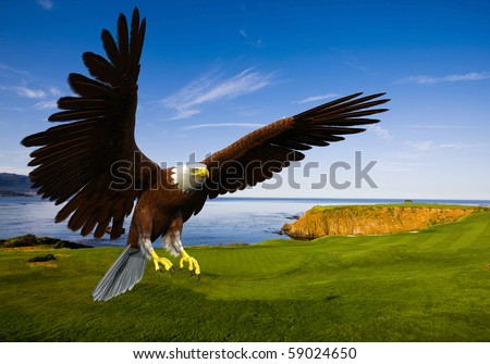 eagle landing in grass